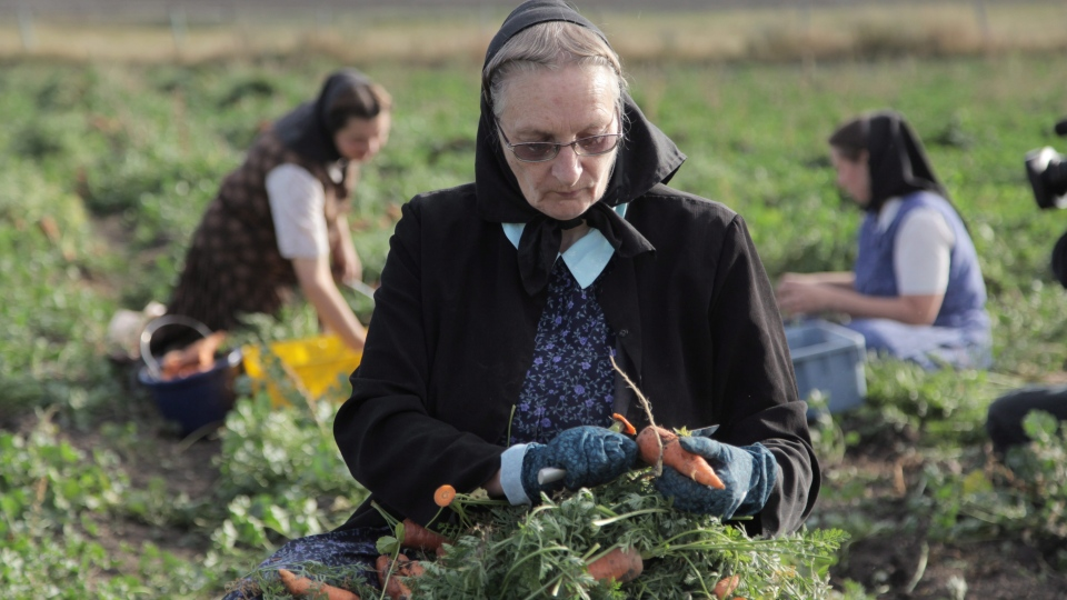 This undated image released by National Geographic Channels shows Hutterite Judy Hofer picking carrots from the garden in King Colony, Mont.