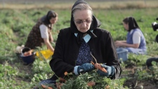 National Geographic Channels shows Hutterite Judy