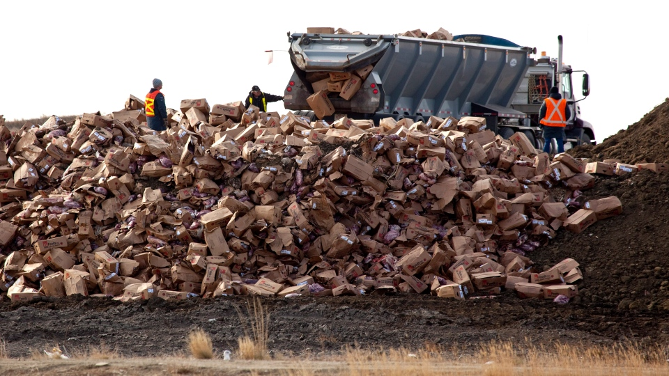 Beef from the XL Foods cattle processing plant is dumped at a landfill site near Brooks, Alta., on Monday, Oct. 22, 2012. (Jeff McIntosh / THE CANADIAN PRESS)