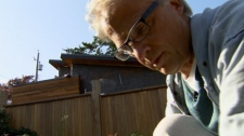 Don Wishlow works in his Vancouver garden next door to a laneway house under construction. Oct. 21, 2010. (CTV)