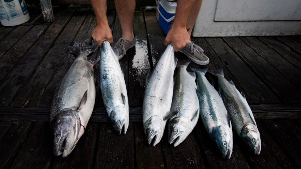 Salmon restocking gets worldwide attention
