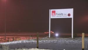 CTV Calgary: Workers return to XL Foods