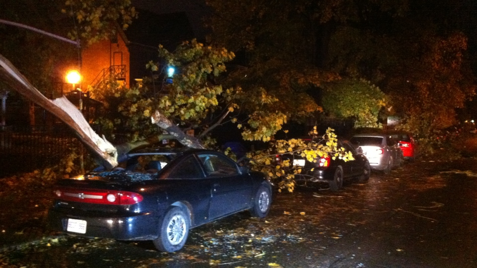 A fallen tree on Bellevue Ave near College as Sandy bears down on Toronto early Tuesday, Oct. 30, 2012. (Scott Lightfoot / CTV News)