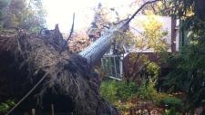 Tree topples onto home