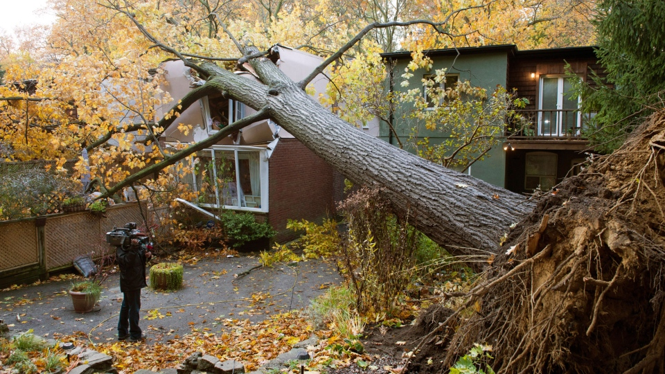 A videographer shoots a house in Toronto that was crushed by a tree felled in superstorm Sandy on Tuesday Oct. 30, 2012. (Frank Gunn / THE CANADIAN PRESS)
