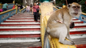 A macaque monkey sits on a handrail of a staircase at Batu Caves, on the outskirts of Kuala Lumpur, Malaysia, Thursday, Aug. 23, 2012. (AP / Vincent Thian)