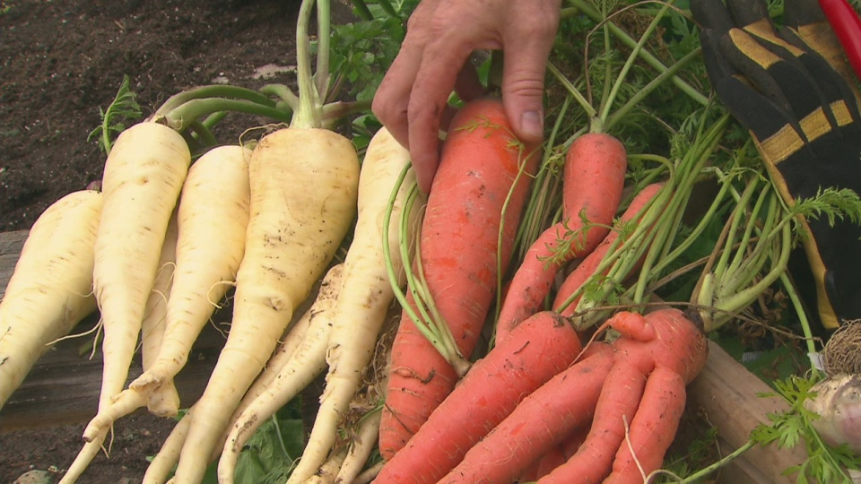 Gardening expert Mark Cullen shared his tips on harvesting autumn vegetables after a frost on Canada AM on Nov. 5, 2012.