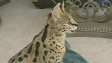 CTV Regina: Family fights to keep exotic pet