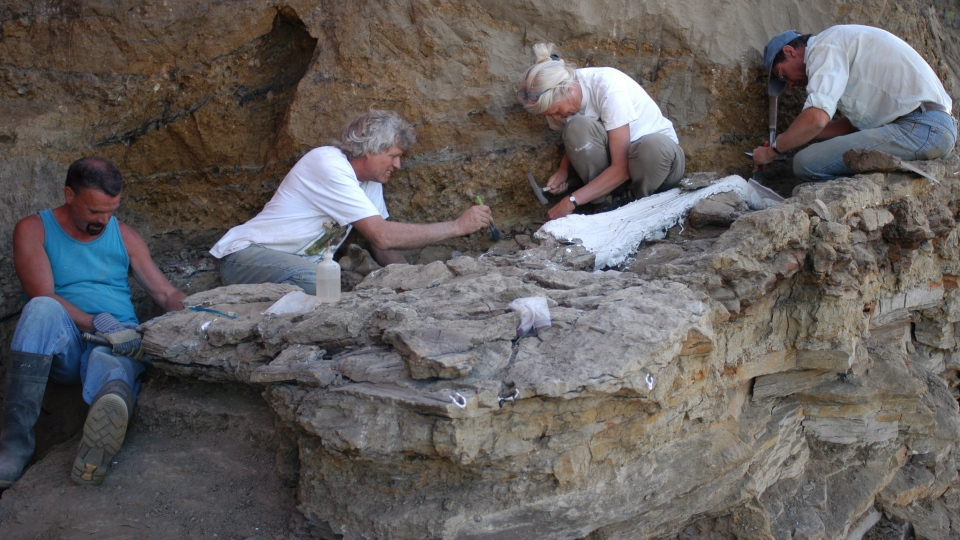 Philip Currie, second from left, a paleontologist with the University of Alberta, at a dig site in the Grande Prairie, Alta. area in 2003. (Courtesy of Royal Tyrrell Museum)