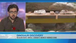 CTV News Channel: Researchers unveil dinosaur