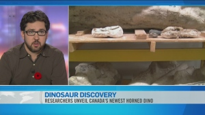 CTV News Channel: Researchers unveil dinosaur