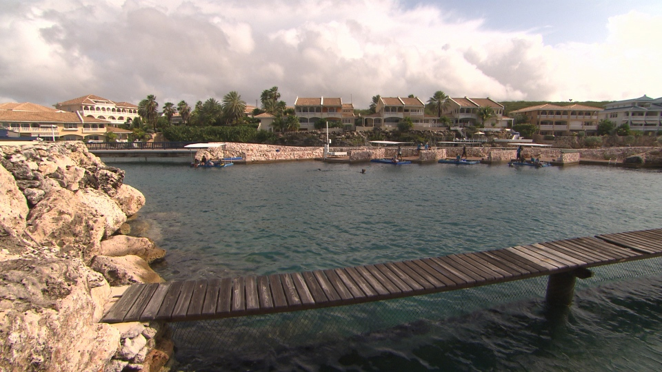 The dolphin pool at the Curacao Dolphin Therapy Center. The two-week Dolphin Assisted Therapy program costs $8,000, not including flights, accommodation and food.