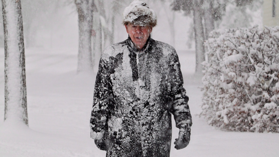 Dallas Strangway is covered in snow while out for a walk in Edmonton, Wednesday, Nov. 7, 2012. (Jason Franson / THE CANADIAN PRESS)