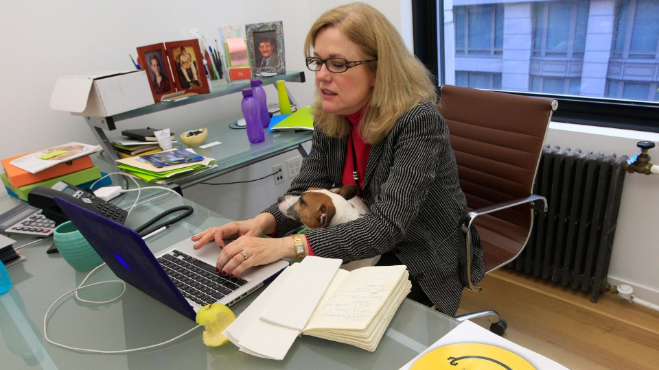 Lily, an 8-year old Jack Russell Terrier, sits on Dorothy Wetzel's lap as she works in her office in midtown Manhattan in an effort to combat occupational stress. (AP Photo/Mary Altaffer)