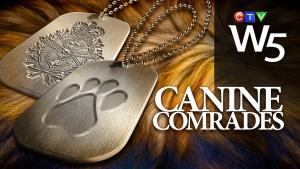 W5: Canine Comrades