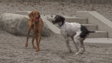 Higher fines for aggressive dogs