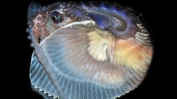 Weird marine creatures