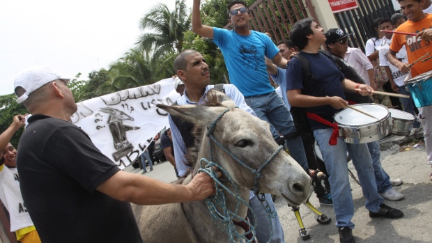 Ecuadorian donkey cannot run for office