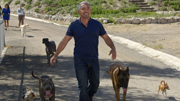 In this Oct. 18, 2012 photo, Cesar Millan walks down to his horse stables with his dogs at his Dog Psychology Center, in Santa Clarita, Calif. (Associated Press File Photo / Mark J. Terrill)