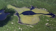 Undated photo of ELARP wetlands.