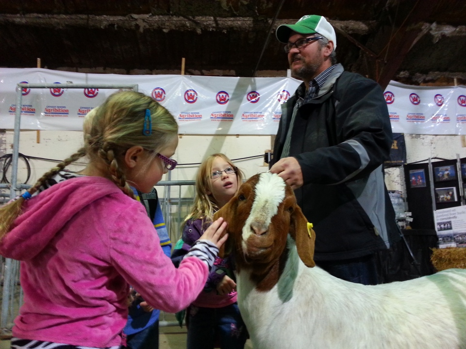 The 43rd annual Canadian Western Agribition starts Monday in Regina. (File photo)