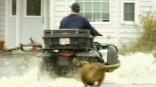 A man uses an ATV to get through the knee-high flood water that surrounds his home in Upper Clyde, N.S., on Tuesday, Nov. 9, 2010.