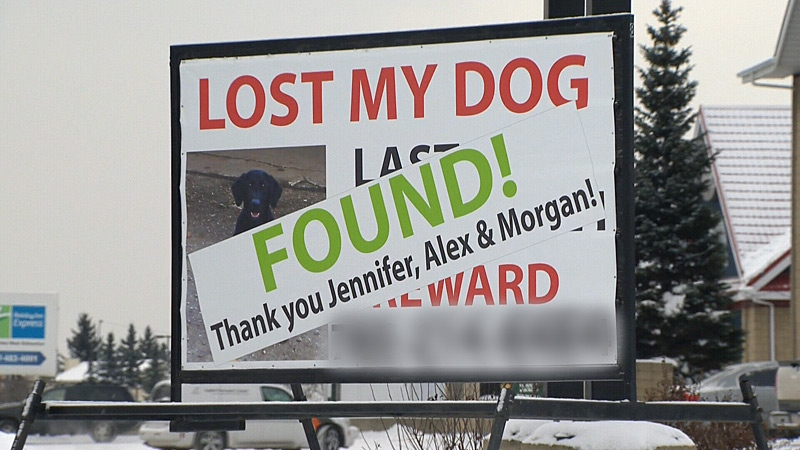 A man rented out a billboard to try and find his missing dog - and it worked. The billboard was later covered with the word 'FOUND' and a thank you to the people who helped locate the dog.