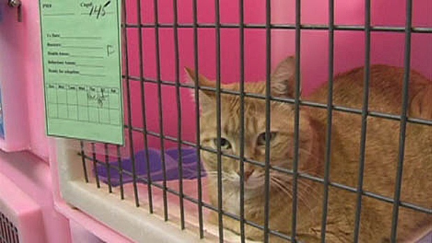 Over 70 animals were seized from a home in Elrose and taken to the Saskatoon SPCA, Jan. 15, 2011.