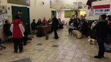 Animal Services Santa fundraiser