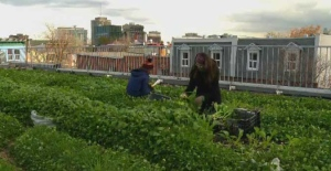 Tim Murphy and Noemie Desbiens-Riendeau run the urban agriculture program at Santropol roulant.
