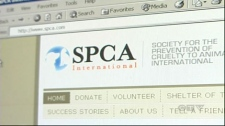 The Montreal SPCA is suing for ownership of the SPCA.com domain.