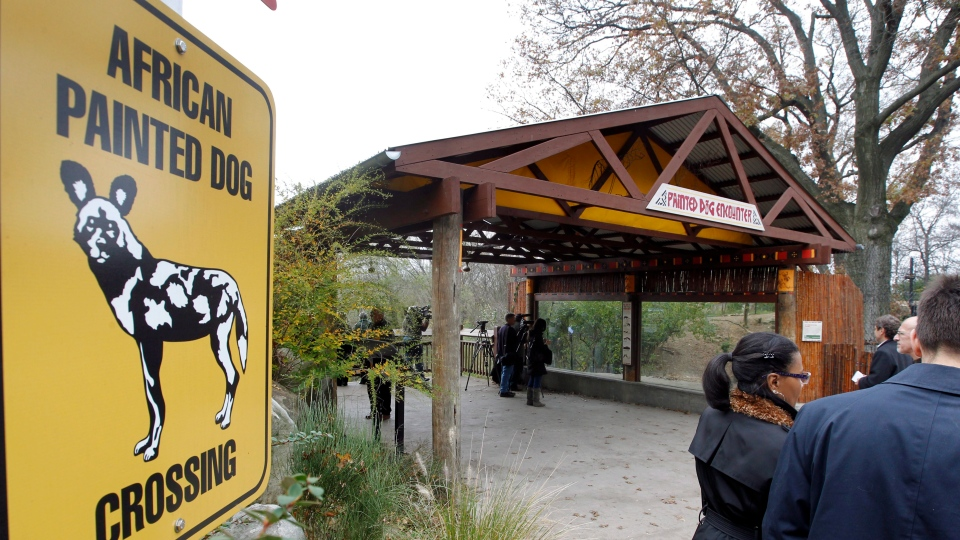 Reporters and photographers gather at an observation area during a press tour near the overlook platform where a boy fell into the exhibit that was home to a pack of African painted dogs at the Pittsburgh Zoo. (AP Photo/Keith Srakocic)
