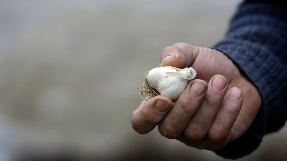 Mico Matic displays garlic that he carries in his pockets in the village of Zarozje, Serbia, Nov. 30, 2012. (AP / Darko Vojinovic)