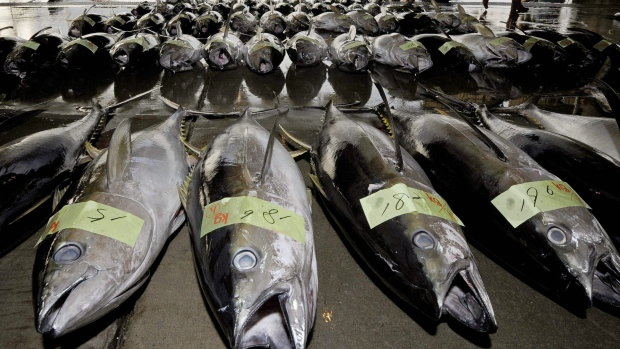 Environmentalists worried about tuna overfishing