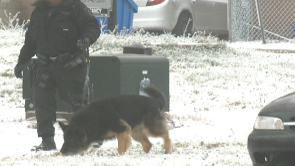 Police dog and officer search the area surrounding 199 Elmridge Dr. in Kitchener Dec. 1, 2012