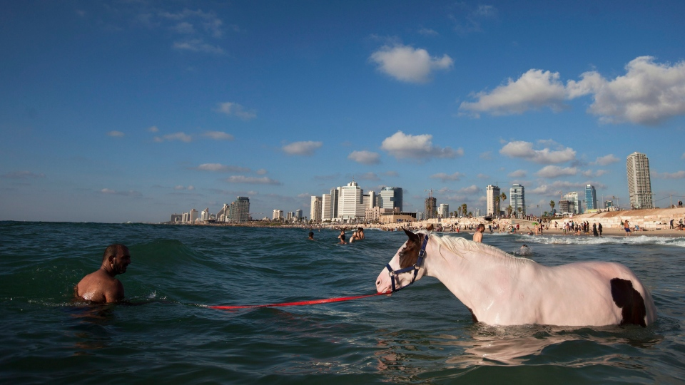 In this Tuesday, Aug. 21, 2012 file photo, an Israeli Arab man swims with a horse in the Mediterranean Sea off the beach in Tel Aviv, Israel, the third day of Eid al-Fitr. (AP / Oded Balilty)