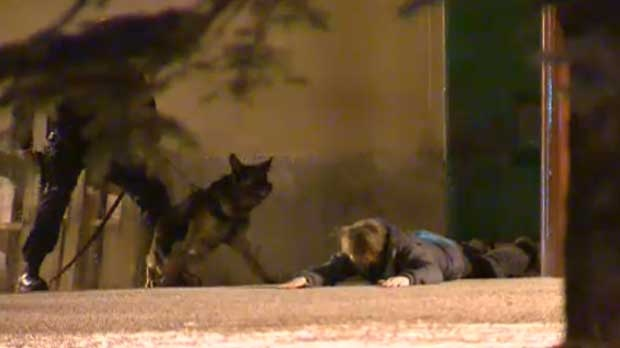 A Calgary Police K-9 unit assisted in the arrest of a suspect in a series of break-ins early Thursday morning.