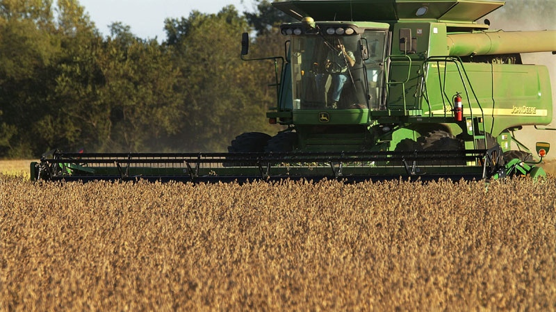 In this photo taken Sept. 30, 2010, central Illinois farmers harvest soybeans in Pleasant Plains, Ill. (AP Photo/Seth Perlman)