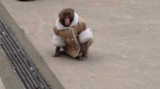 Ikea monkey's owner to protest for his return