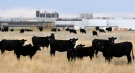 <b>XL Foods recalls beef as E. coli cases detected across Canada</b><br><br> 