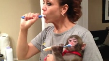 Darwin Ikea monkey macaque Toronto