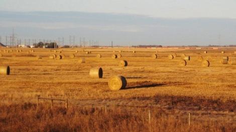 wheat board