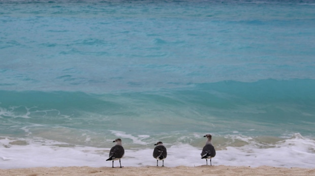 Birds stand on the beach in Cancun, Mexico, Tuesday Nov. 9, 2010. (AP Photo/Dario Lopez-Mills)