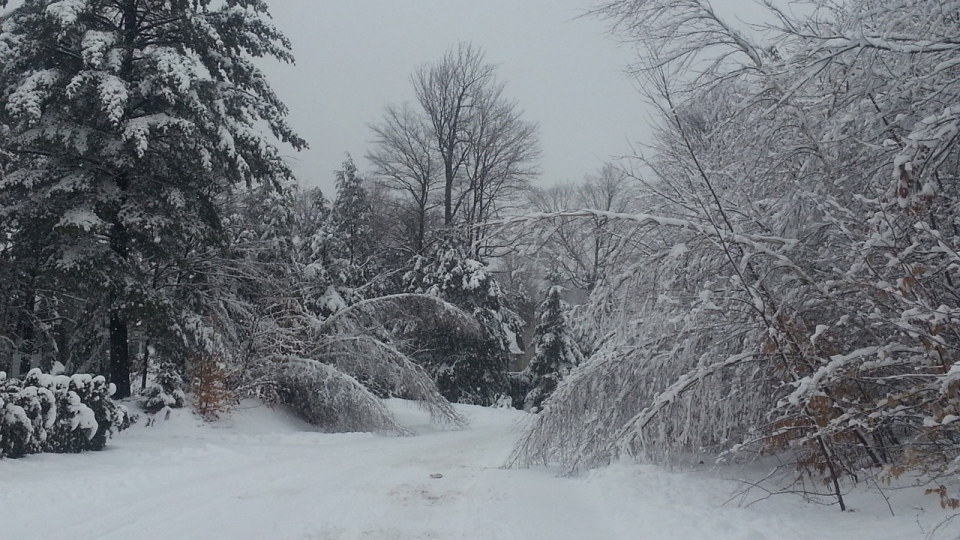 Domenico Ciarallo sent in this photo of the heavy snowfall in Saint Lazare. Some roads are impassable because trees and branches are bent low under the load (Dec. 18, 2012)
