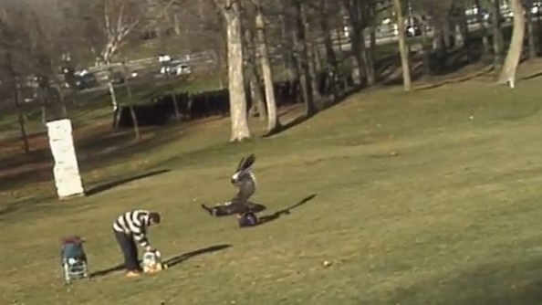 Baby snatched by eagle