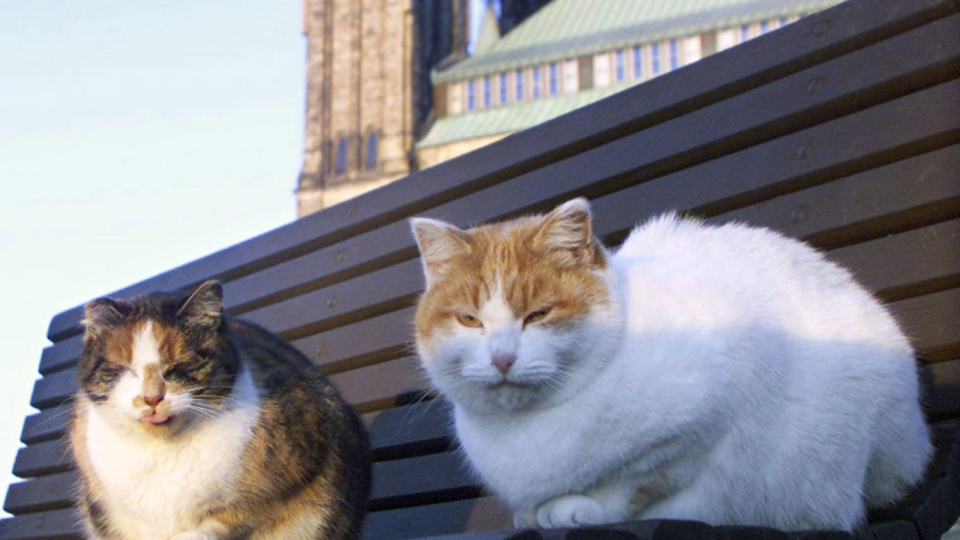 Two of Parliament Hill's resident stray cats sit on a park bench outside the House of Commons in Ottawa on Dec. 1, 1999. (Tom Hanson / THE CANADIAN PRESS)