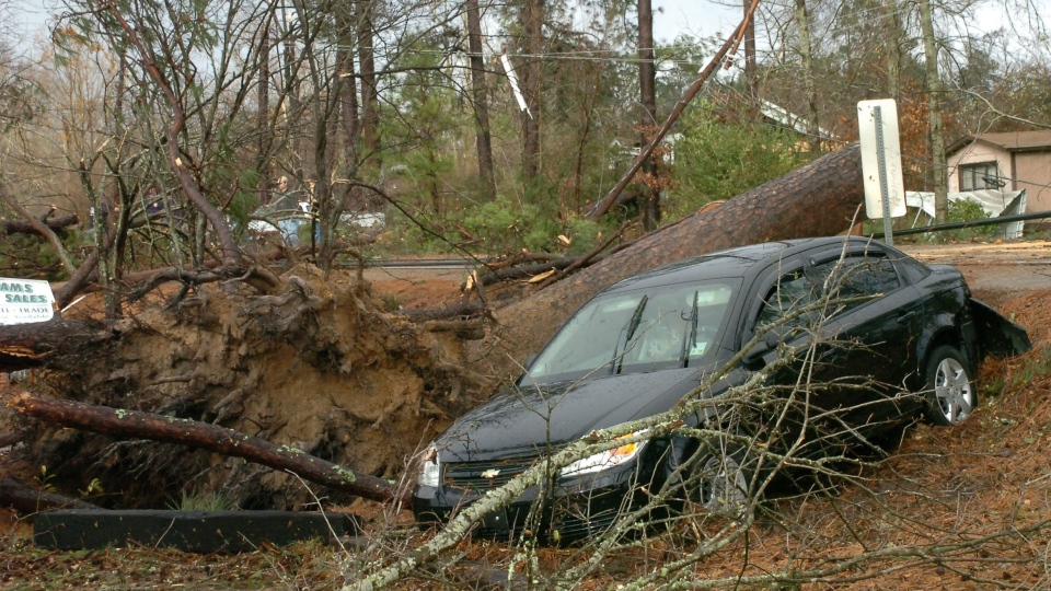 Geraldine Pedersen and her dog Marlow were in her car traveling down U.S. 71 in the Tioga, Louisiana area when a tree fell down in front of the car and a wind knocked her car into a yard, Tuesday, Dec. 25, 2012. (AP / The Town Talk, Melinda Martinez)