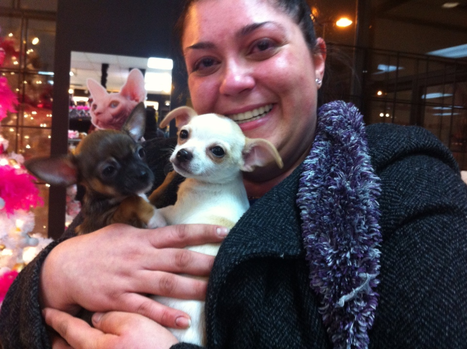 Two of the expensive puppies stolen on Thursday after being saved by the former employee of a Laval pet store.