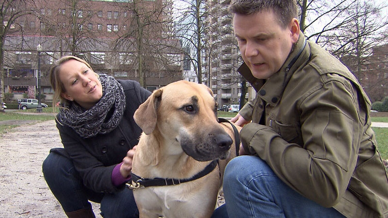 Karyn Lauridsen and Josh Brown crouch with their dog Abby in Vancouver's West End neighbourhood. Dec. 28, 2012. (CTV)