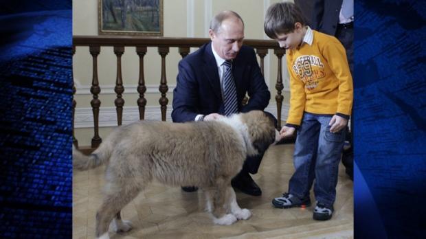 Vladimir Putin Dog Buffy Meet Putin's new dog: ...